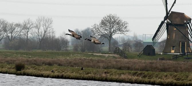Vogelgebied Weteringpark en Ruigekade Leiderdorp