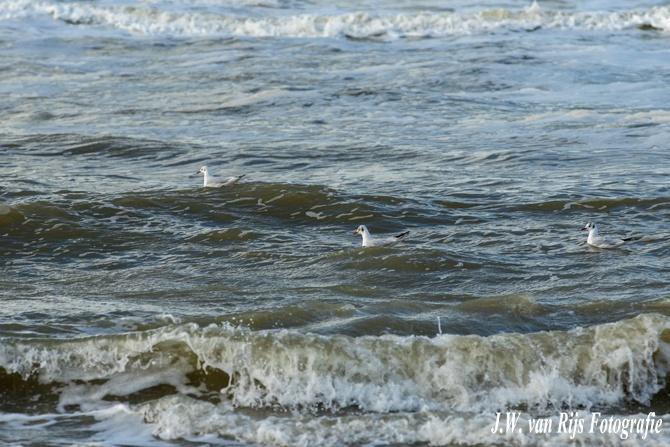strand, Noordwijk