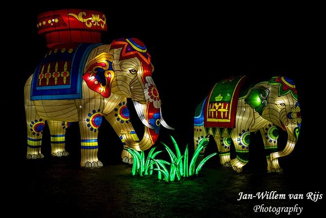 Junglebook Light Festival