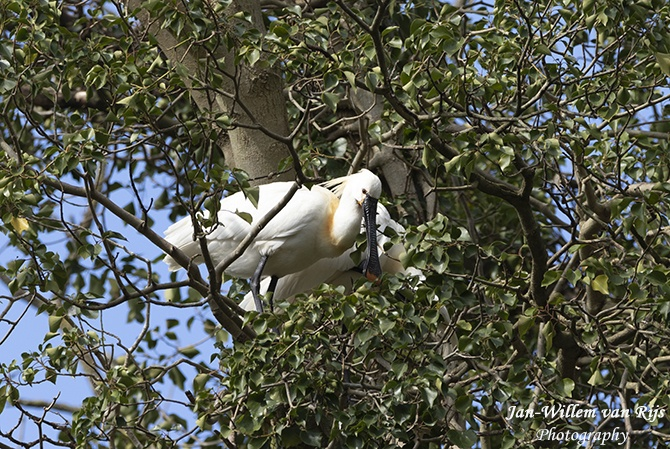 Vogels in Park Cronestein Leiden